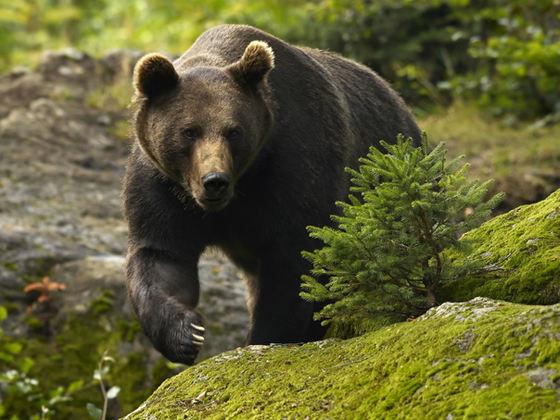 ALERTĂ! Doi pui de urs au murit de foame în pădurea din zona Cheia 3