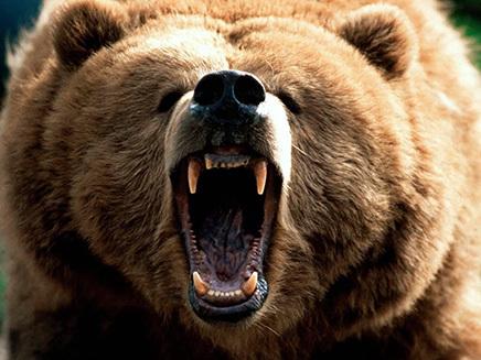 OFICIAL! Urşii agresivi care atacă pe teritoriul localităţilor să poată fi tranchilizaţi şi relocaţi sau împuşcaţi de o echipă formată de jandarmi şi vânători, în 24 de ore 6