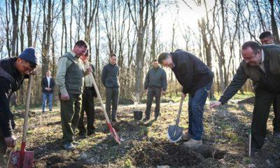 Iohannis plantează vineri copaci. Unde va merge președintele 9